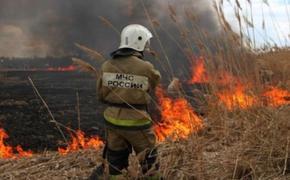 В России из-за природных пожаров с начала года сгорело более 250 домов