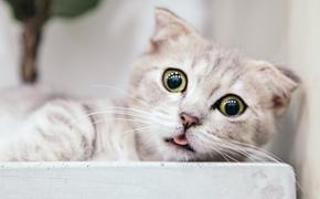 Наталия Гулькина потратила миллион рублей на лечение любимого кота от коронавируса
