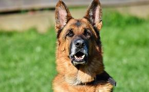 В США выявили первый случай COVID-19 у собаки