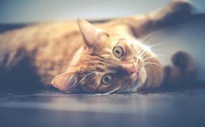 Стало известно, какие симптомы COVID-19 проявляются у домашних животных