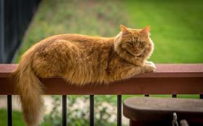В Англии умер самый старый кот в мире