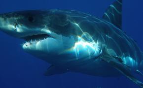 В Австралии мужчина погиб в результате нападения акулы