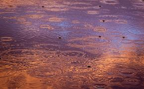 Откуда взялось нефтяное пятно на реке Сходне в Москве