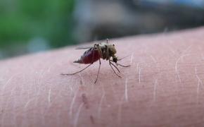Эксперт назвал эффективные средства против «агрессивных» комаров