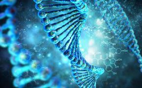 Учёные определили новые причины старения