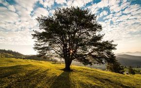 В Саратовской области врачи рассказали о состоянии девочки, на которую упало дерево