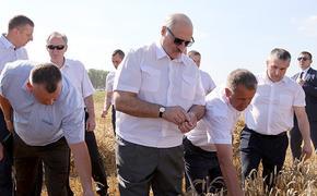 Лукашенко: не надо дергать аграриев на выборы во время уборки урожая