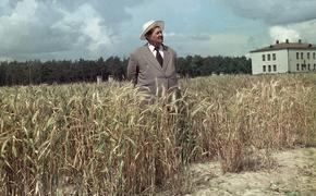 ДОМ.РФ уничтожил единственную в мире многолетнюю пшеницу