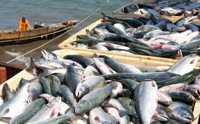 Российскому потребителю не хватает рыбы