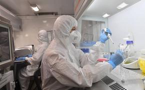 Ясновидящая предсказала скорую новую эпидемию тяжелее коронавируса COVID-19