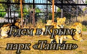Едем в Крым: «Тайган»: Зоопарк или..? Парк львов