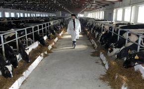 Фермерам Хабаровского края раздадут 26 млн рублей