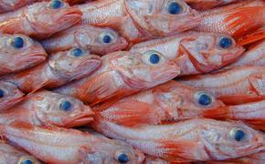 В этом году на Сахалине рыбаки поймали  более  88  тонн  шипощёка
