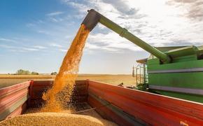 Экспорт российского зерна в Бразилию вырос в 5 раз и достиг 30 миллионов долларов
