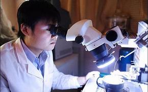 Новая раса. Учёные в КНР создают гибрид человека и обезьяны