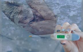 Температура тела современного человека снизилась на 0,4 градуса