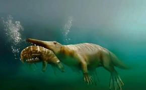 Предки китов шагали по земле и были похожи на крыс