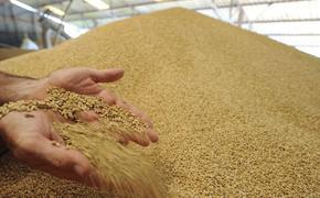 В России продолжают расти цены на зерно