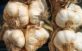 Врач-диетолог Инна Заикина назвала заболевания, при которых людям противопоказано употребление чеснока