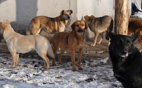 Минприроды построит приюты для бездомных животных