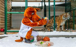 Тигр Гектор и рысь Марыся из приюта «Спаси меня» сыграли в баскетбол