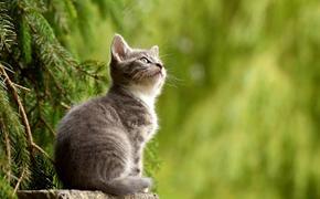 «Кто самый умный?»: Нейробиологи выяснили, что кошки умнее собак