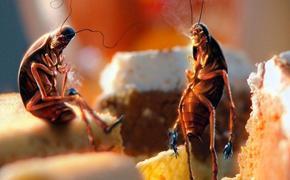 Готовимся к февральскому набегу: как защититься от атаки тараканов