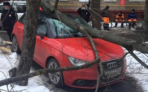 Дерево преткновения: почему московские коммунальщики боятся вырубать прогнивший и падающий на головы сухостой во дворах?