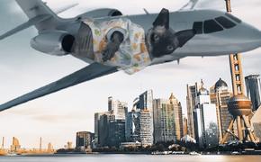 Кот Криштиану Роналду попал под машину и улетел на лечение в Испанию на частном самолете