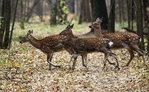 Браконьеры ради забавы убили 15 оленей в национальном парке «Лосинный остров»