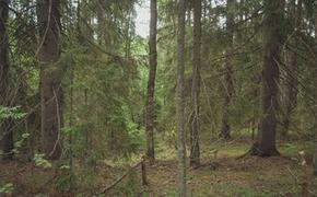 Виновный в вырубке 58 деревьев на улице Русской не отделается штрафом