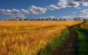 Сельское хозяйство России страдает как от отсутствия госпомощи, так и её избытка