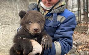 В хабаровском зоопарке родился медвежонок