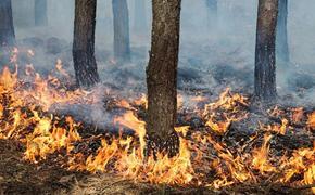 Пожароопасный сезон открыт