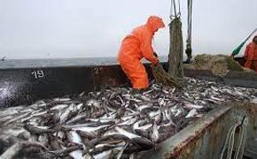 Вашингтон создает «рыбную коалицию» против Пекина