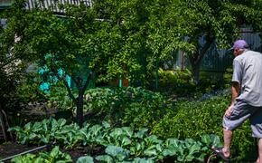 Сколько садовых маршрутов запустят на Южном Урале