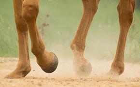 Сбитая лошадью в Ивановской области девочка вышла из комы