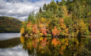 Как управление прибрежными лесами может повлиять на изменение климата