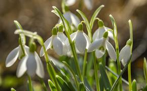 Синоптики назвали сроки аномальной апрельской жары в Москве и на Урале