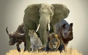 Неконтролируемая торговля дикими животными и растениями – ведет к исчезновению многих видов