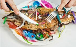 Химические вещества, содержащиеся в пластмассах, приведут к проблемам с рождаемостью