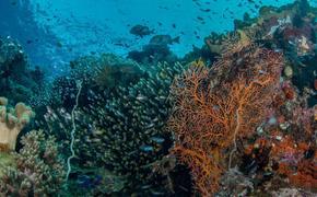 Ученые установили причины и последствия глобального изменения морского биоразнообразия