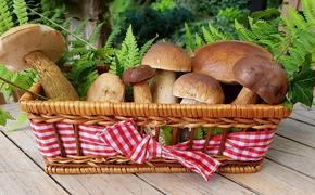 Минприроды разъяснило правила сбора грибов, орехов и березового сока