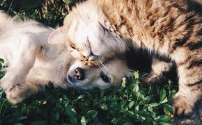 В России появилась новая схема мошенничества с животными