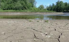 Река в Подмосковье исчезает на глазах