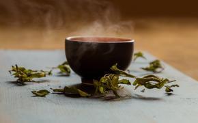 Учёные обнаружили в зелёном чае вещество, которое способно противостоять COVID-19