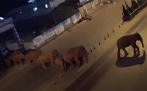 Из китайского заповедника сбежали 15 слонов