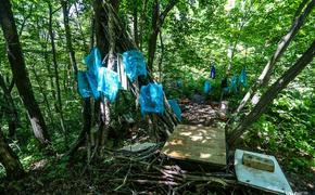 Жители Владивостока обнаружили место, где разделывают животных и сжигают их останки