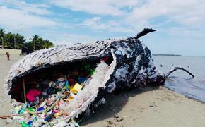 Большая часть пластикового мусора, попадающая в океан – это отходы еды на вынос