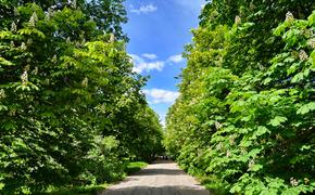 В Самаре на территории Ботанического сада строится церковь, с нарушением законодательства